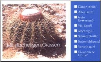 Melocactus sp. auf Bonaire